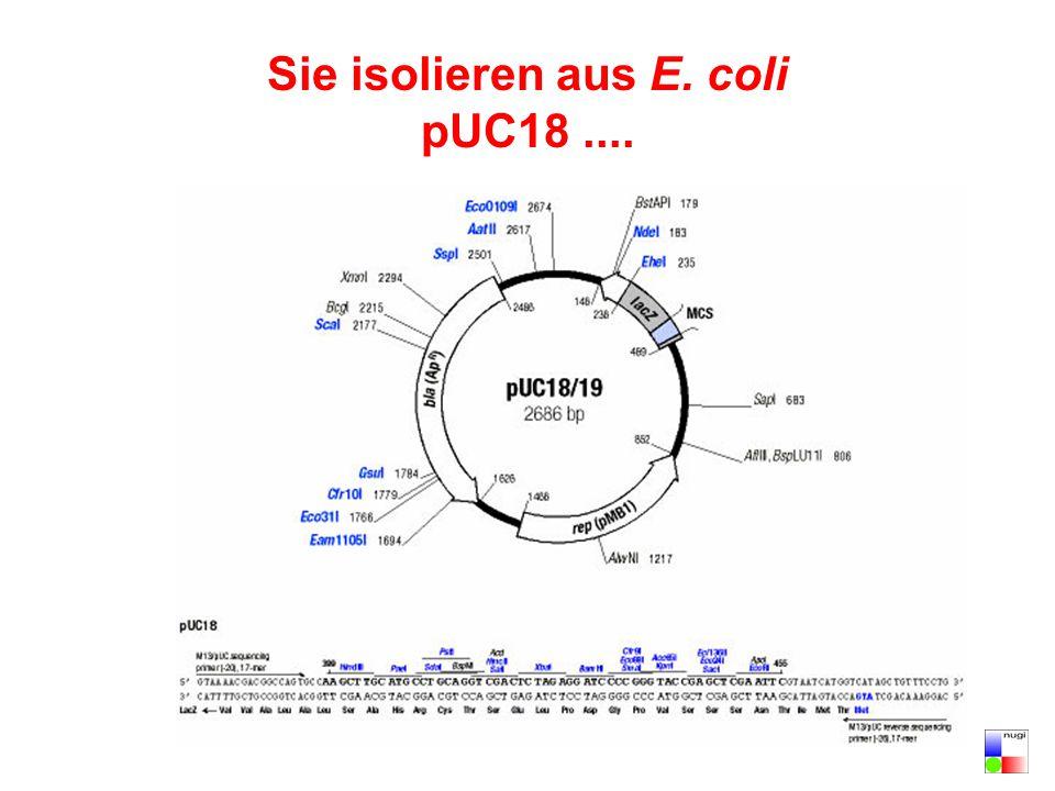Sie isolieren aus E. coli pUC18 ....