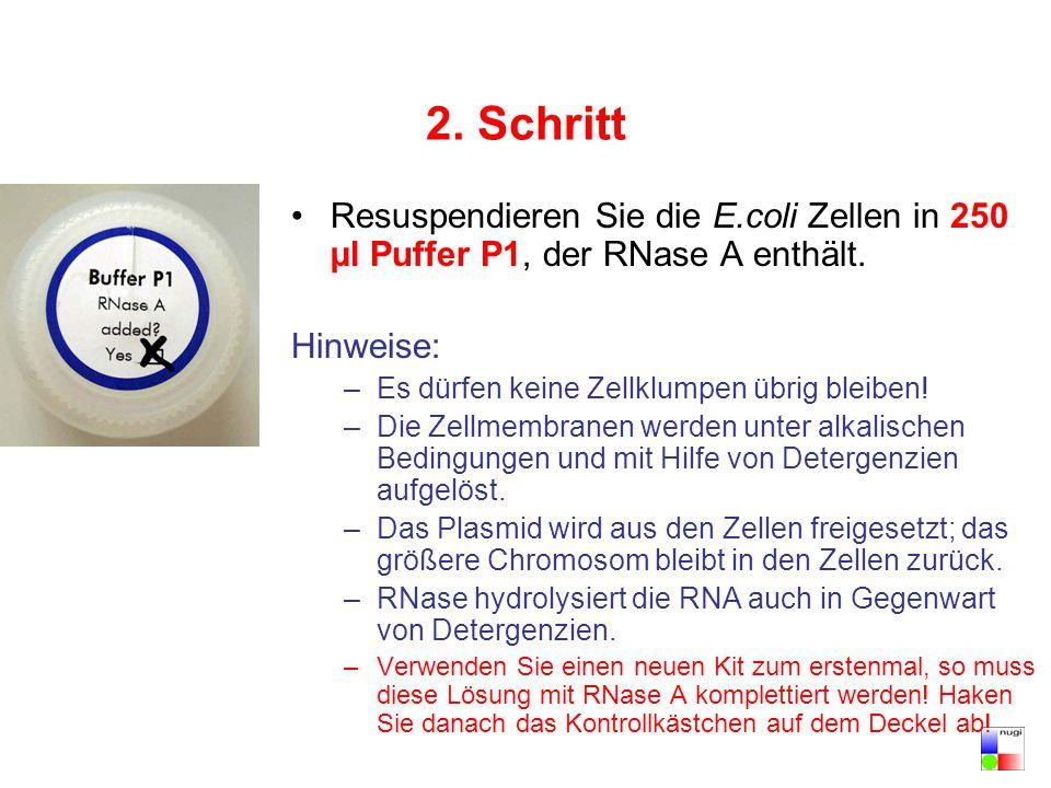 2. Schritt Resuspendieren Sie die E.coli Zellen in 250 µl Puffer P1, der RNase A enthält. Hinweise: