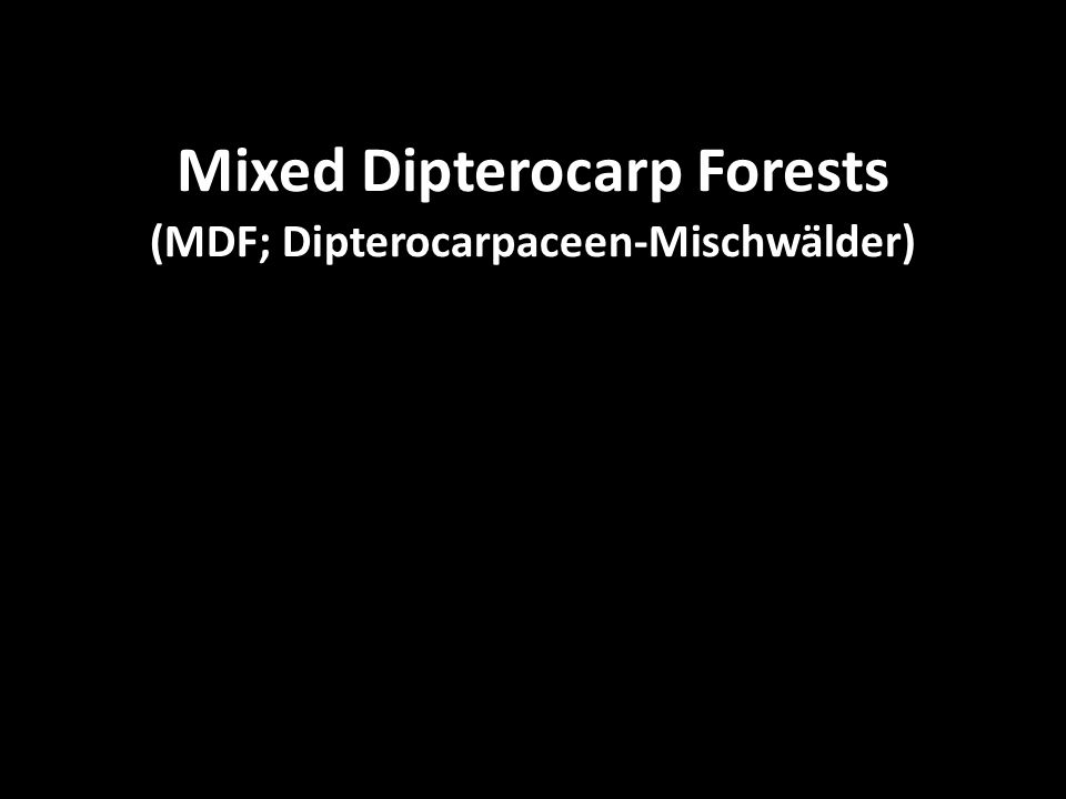 Mixed Dipterocarp Forests