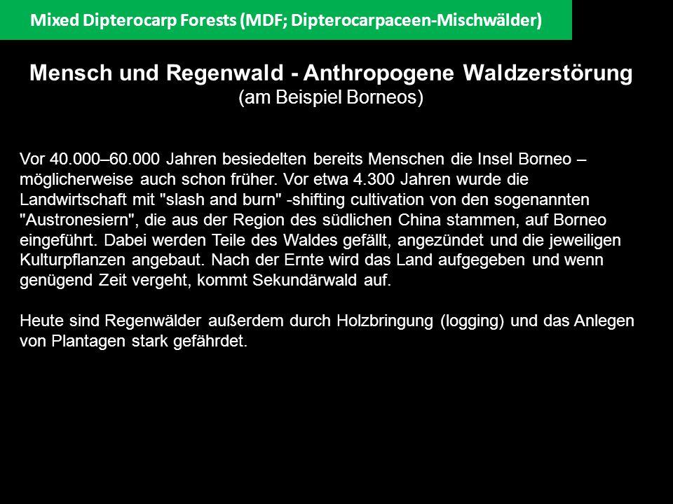 Mensch und Regenwald - Anthropogene Waldzerstörung