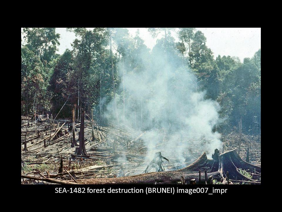 SEA-1482 forest destruction (BRUNEI) image007_impr