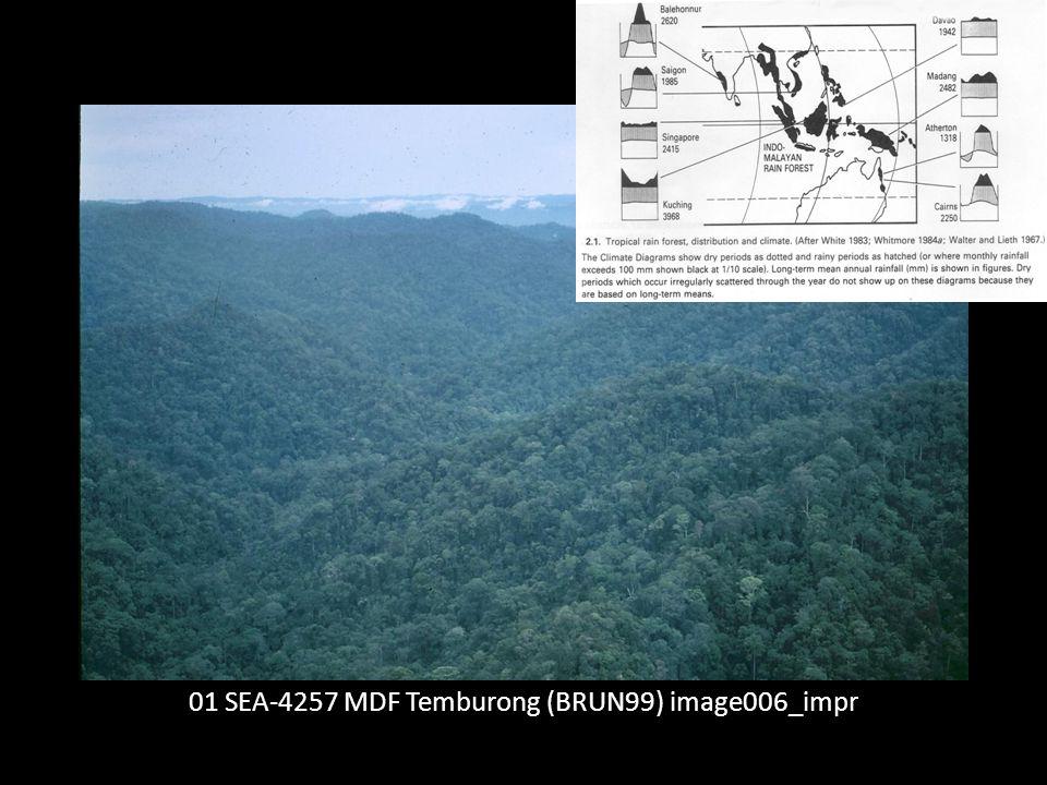 01 SEA-4257 MDF Temburong (BRUN99) image006_impr