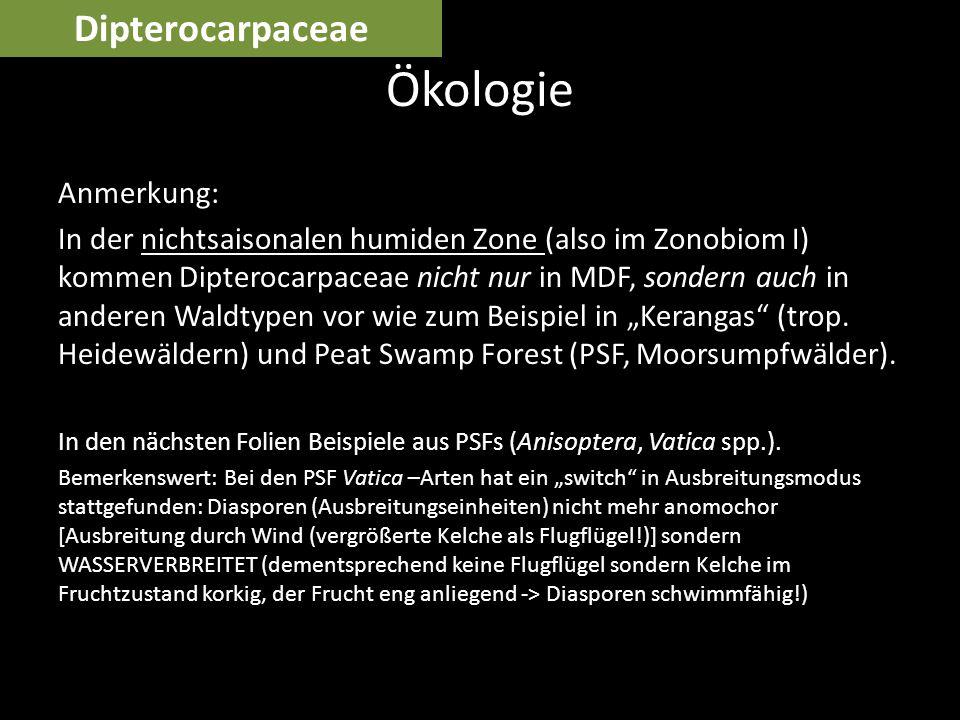 Ökologie Dipterocarpaceae Anmerkung: