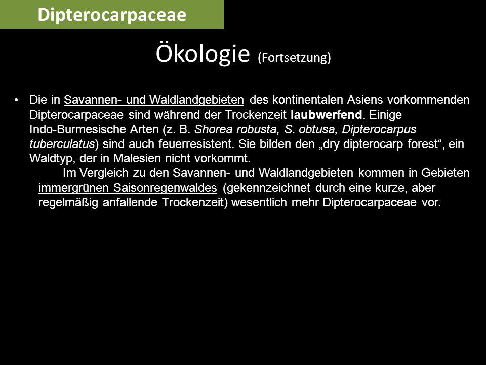 Ökologie (Fortsetzung)