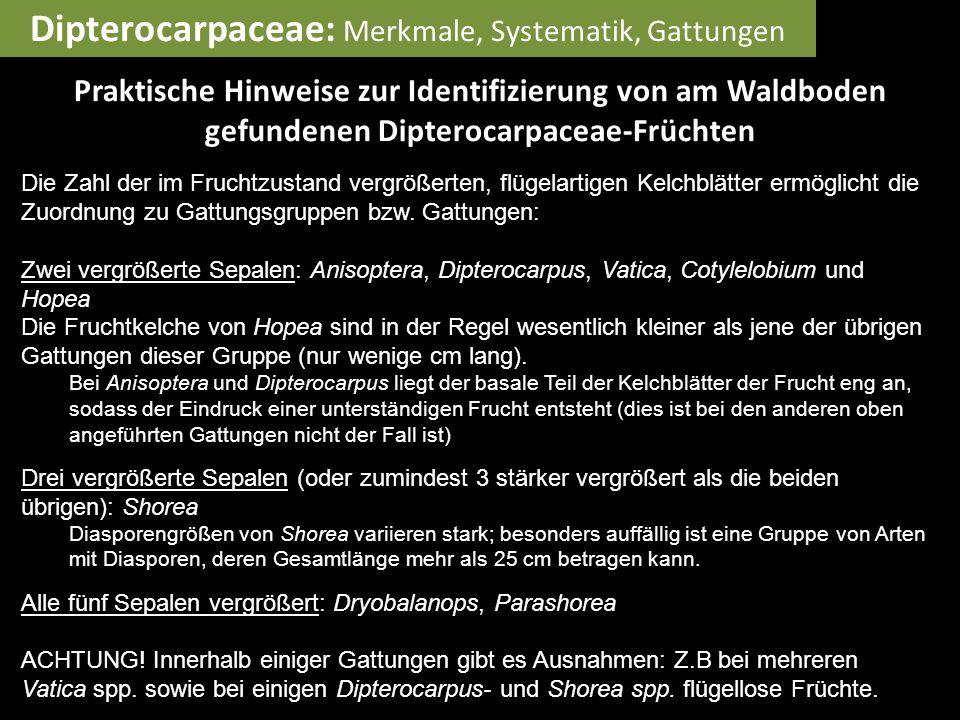 Dipterocarpaceae: Merkmale, Systematik, Gattungen