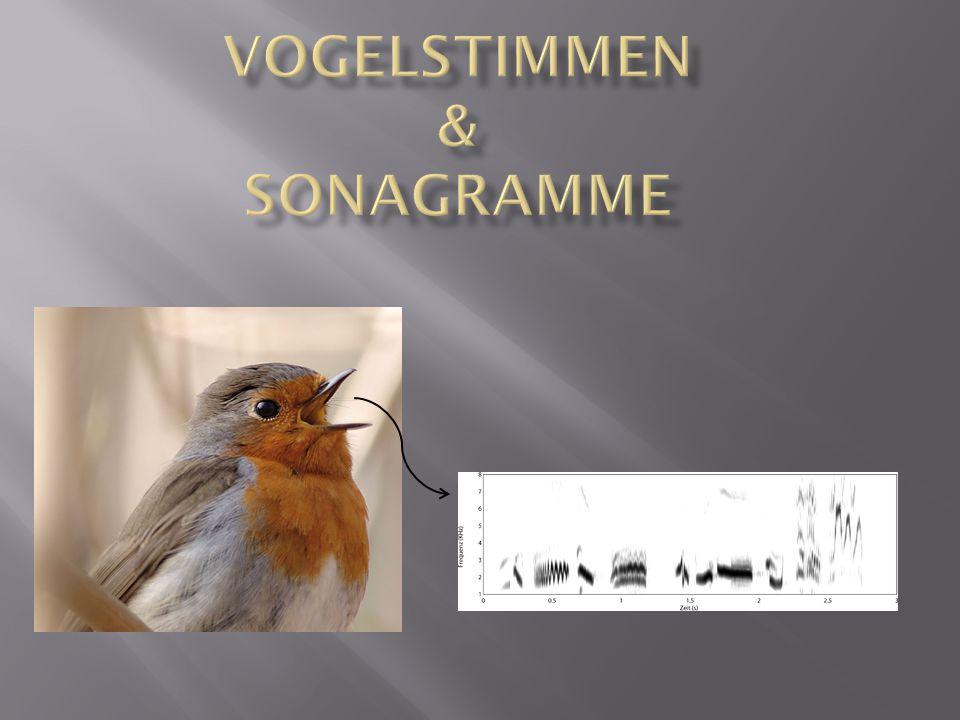 Vogelstimmen & Sonagramme