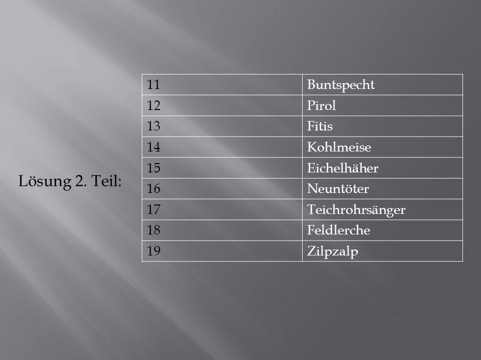 Lösung 2. Teil: 11 Buntspecht 12 Pirol 13 Fitis 14 Kohlmeise 15