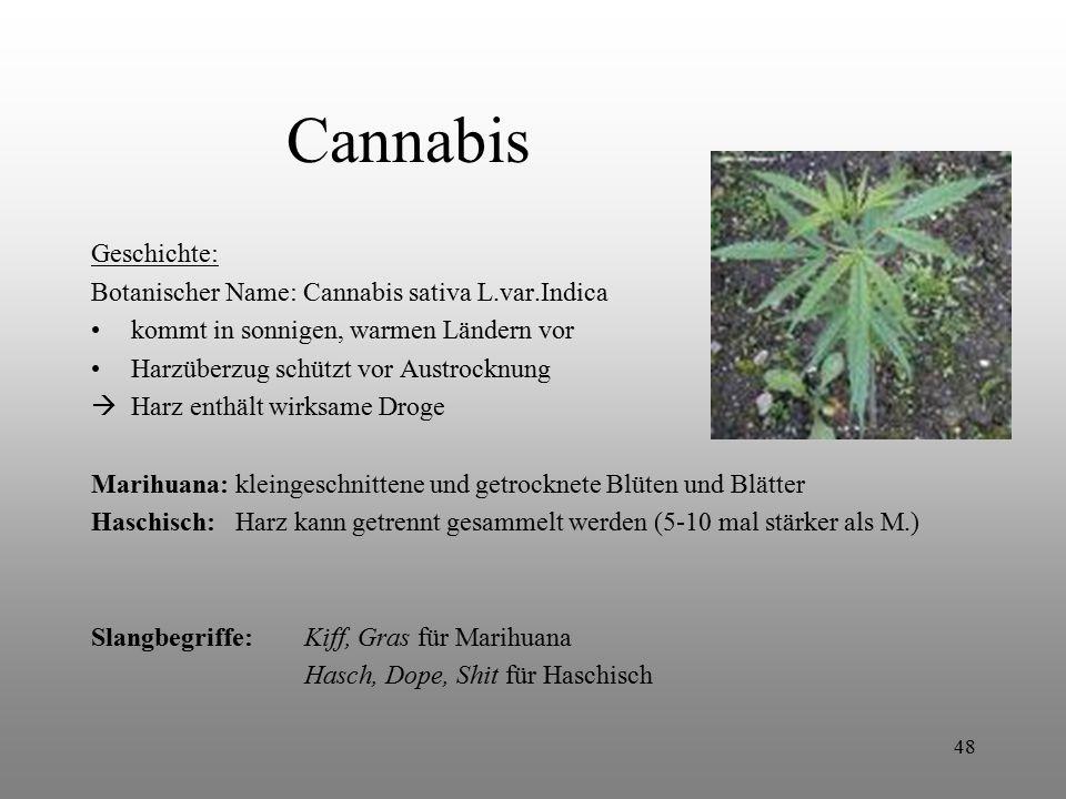 Cannabis Geschichte: Botanischer Name: Cannabis sativa L.var.Indica