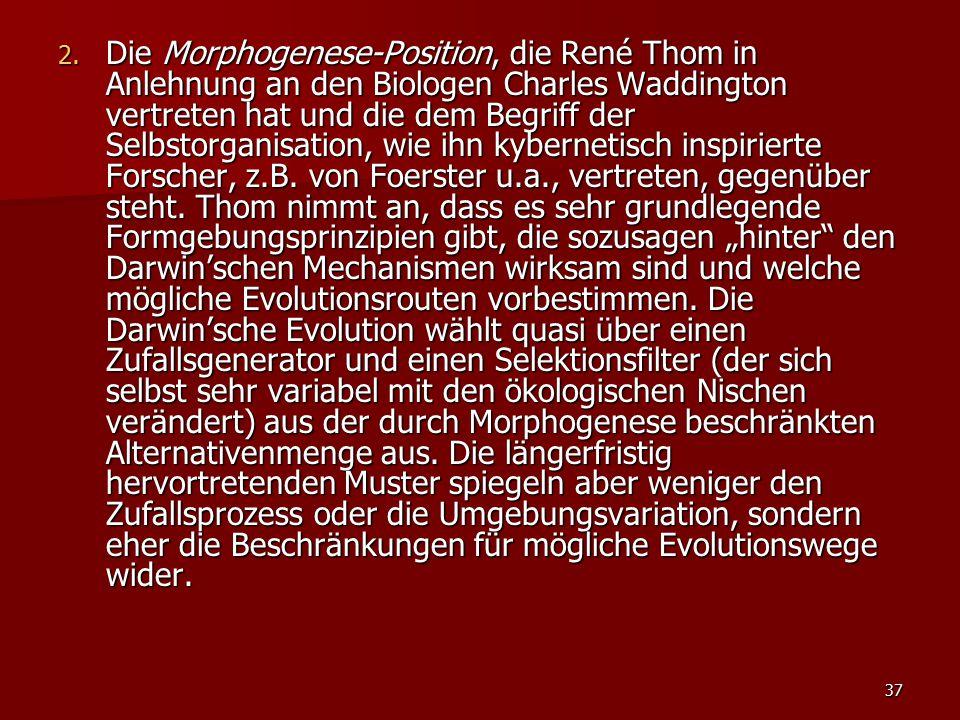 Die Morphogenese-Position, die René Thom in Anlehnung an den Biologen Charles Waddington vertreten hat und die dem Begriff der Selbstorganisation, wie ihn kybernetisch inspirierte Forscher, z.B.