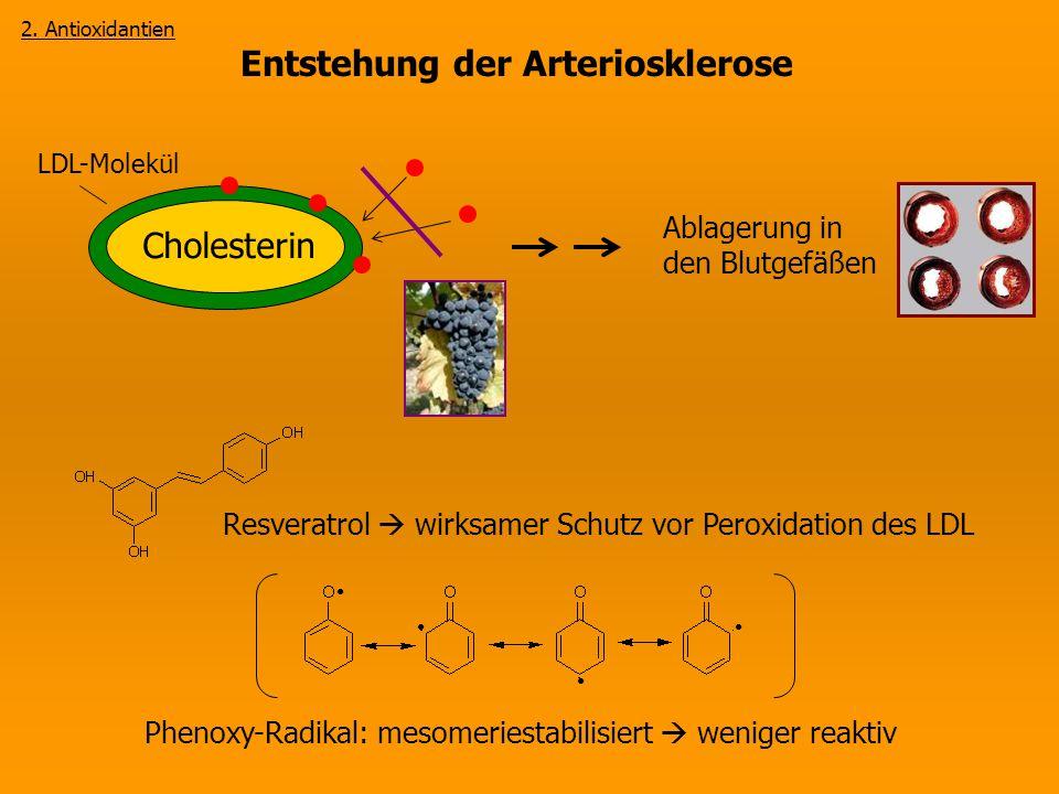 Entstehung der Arteriosklerose