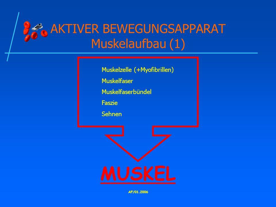 AKTIVER BEWEGUNGSAPPARAT Muskelaufbau (1)