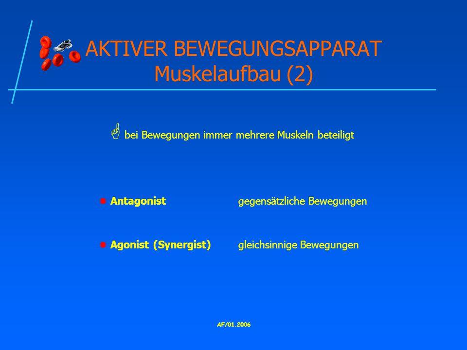 AKTIVER BEWEGUNGSAPPARAT Muskelaufbau (2)
