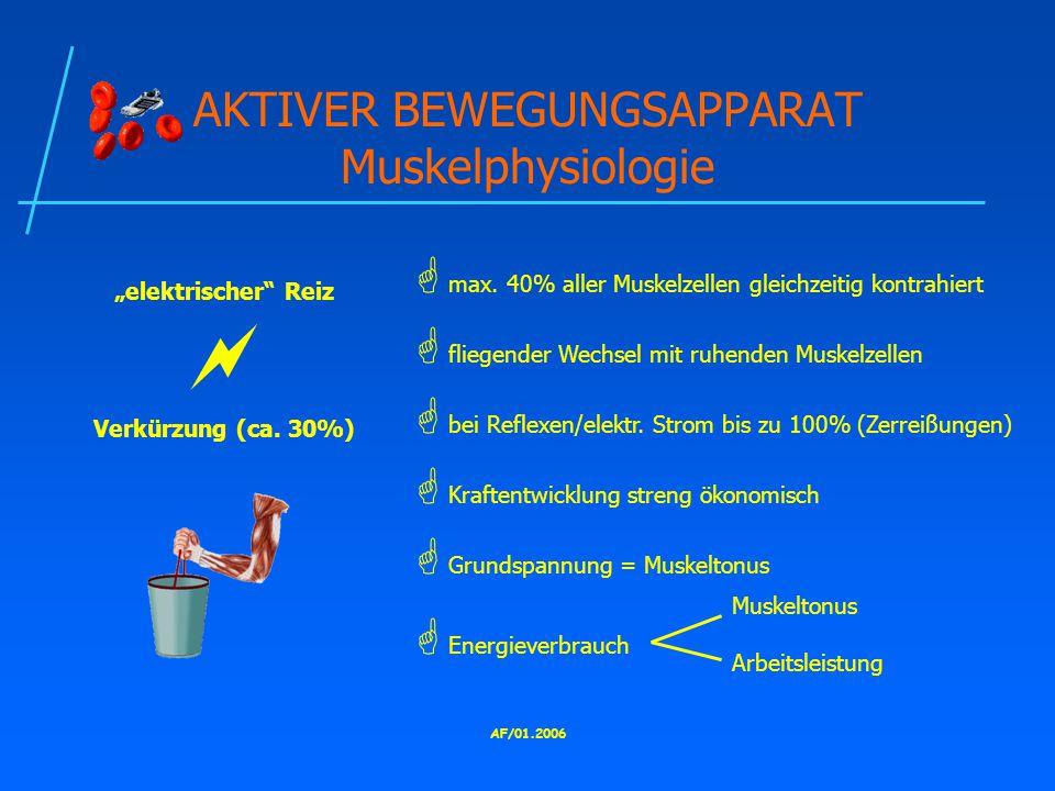 AKTIVER BEWEGUNGSAPPARAT Muskelphysiologie