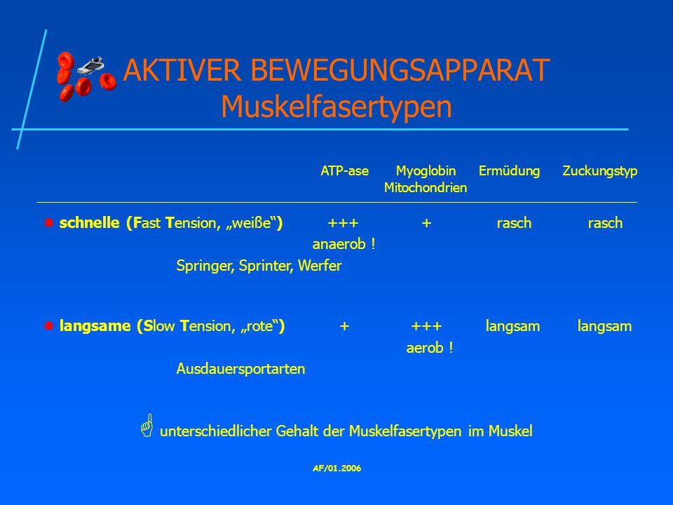 AKTIVER BEWEGUNGSAPPARAT Muskelfasertypen