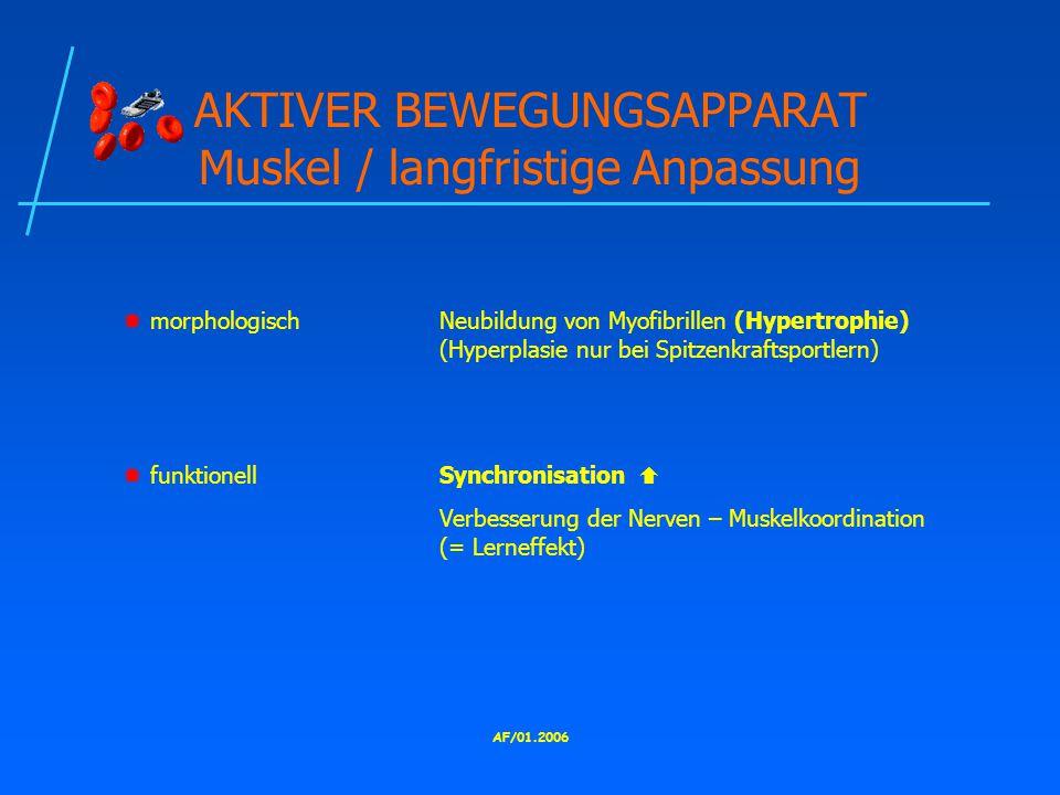 AKTIVER BEWEGUNGSAPPARAT Muskel / langfristige Anpassung