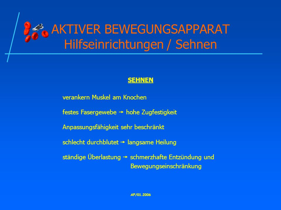 AKTIVER BEWEGUNGSAPPARAT Hilfseinrichtungen / Sehnen