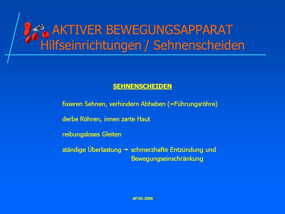 AKTIVER BEWEGUNGSAPPARAT Hilfseinrichtungen / Sehnenscheiden