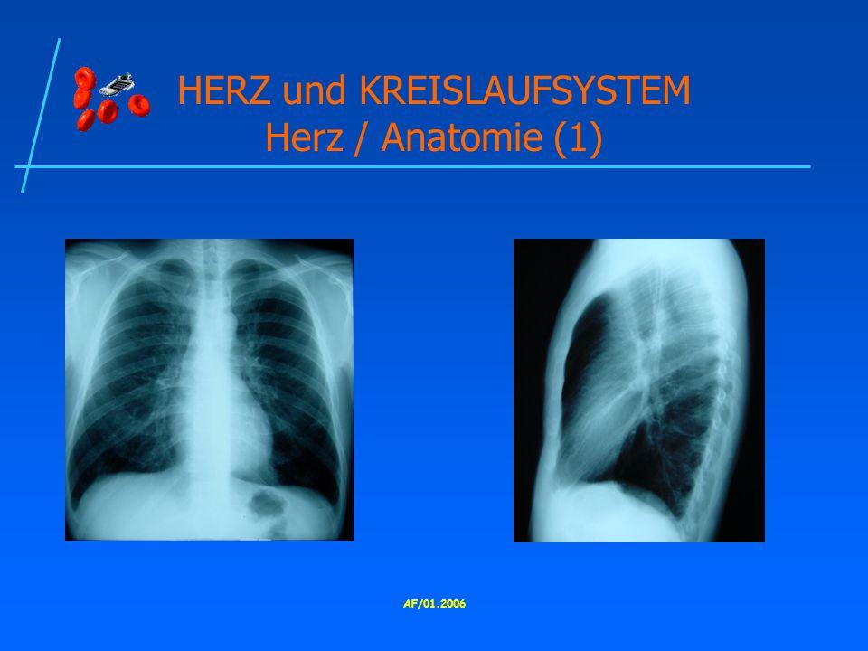 HERZ und KREISLAUFSYSTEM Herz / Anatomie (1)
