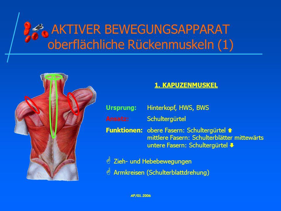 AKTIVER BEWEGUNGSAPPARAT oberflächliche Rückenmuskeln (1)