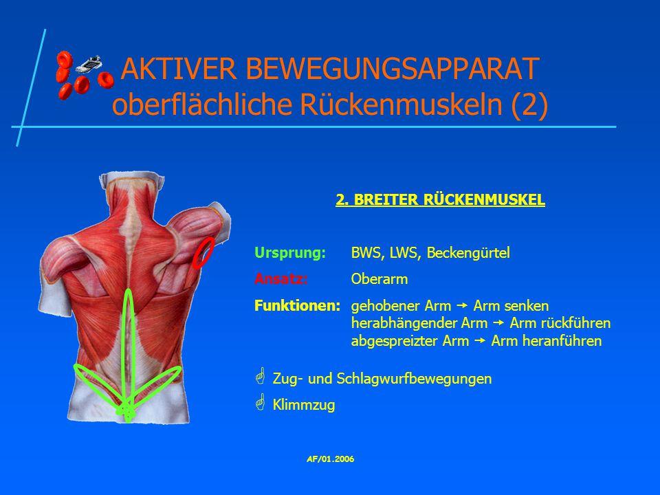 AKTIVER BEWEGUNGSAPPARAT oberflächliche Rückenmuskeln (2)