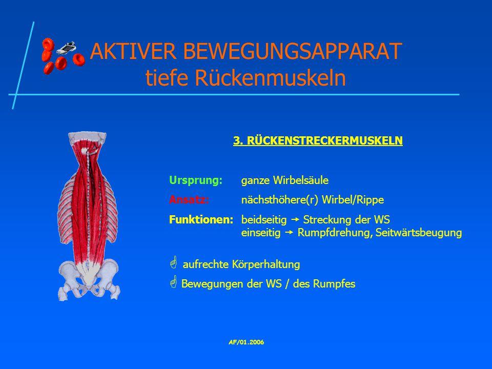AKTIVER BEWEGUNGSAPPARAT tiefe Rückenmuskeln