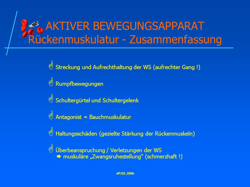 AKTIVER BEWEGUNGSAPPARAT Rückenmuskulatur - Zusammenfassung