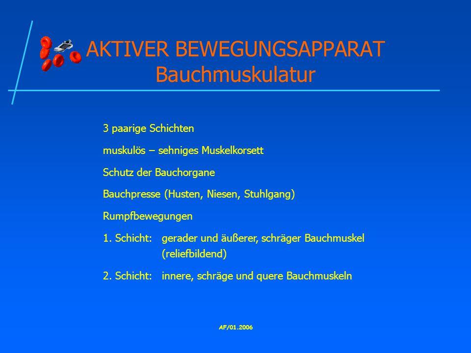 AKTIVER BEWEGUNGSAPPARAT Bauchmuskulatur