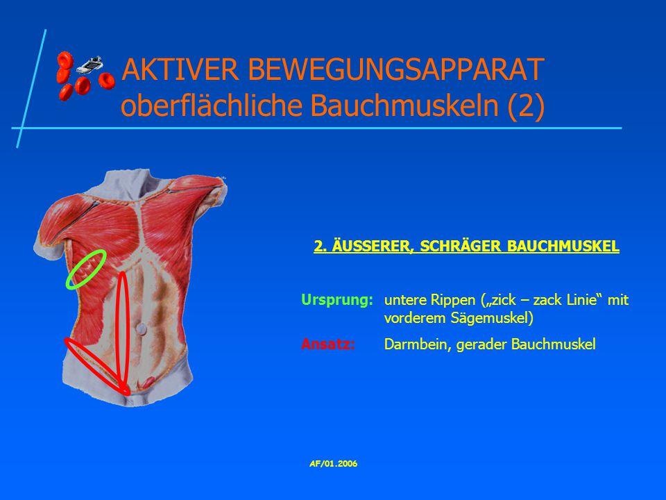 AKTIVER BEWEGUNGSAPPARAT oberflächliche Bauchmuskeln (2)