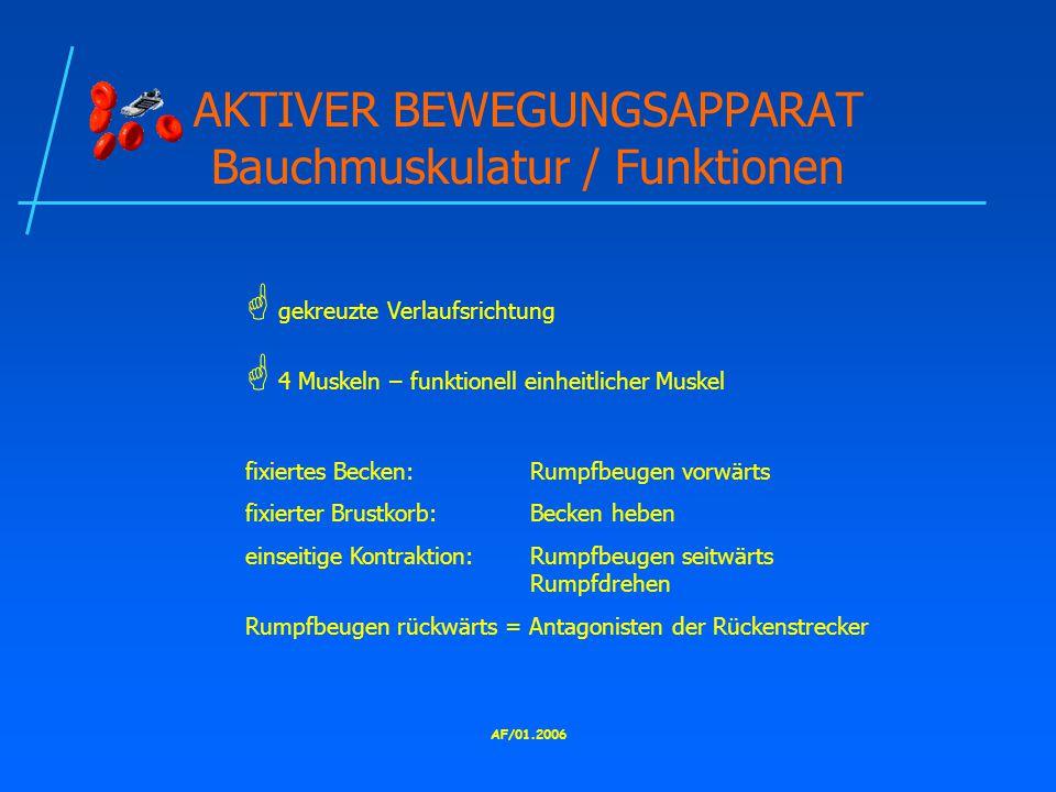 AKTIVER BEWEGUNGSAPPARAT Bauchmuskulatur / Funktionen