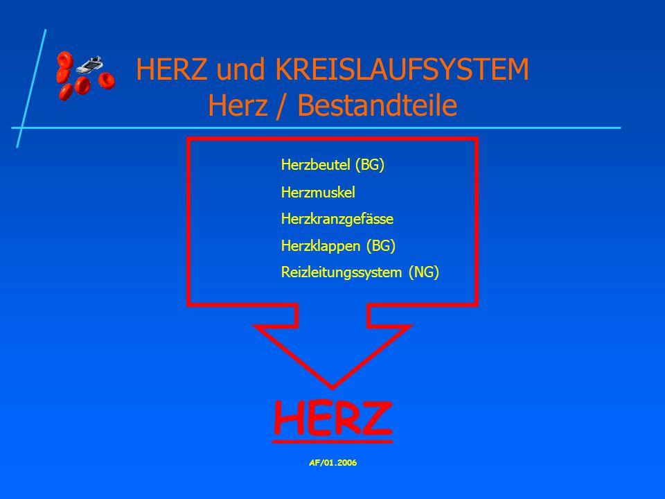 HERZ und KREISLAUFSYSTEM Herz / Bestandteile