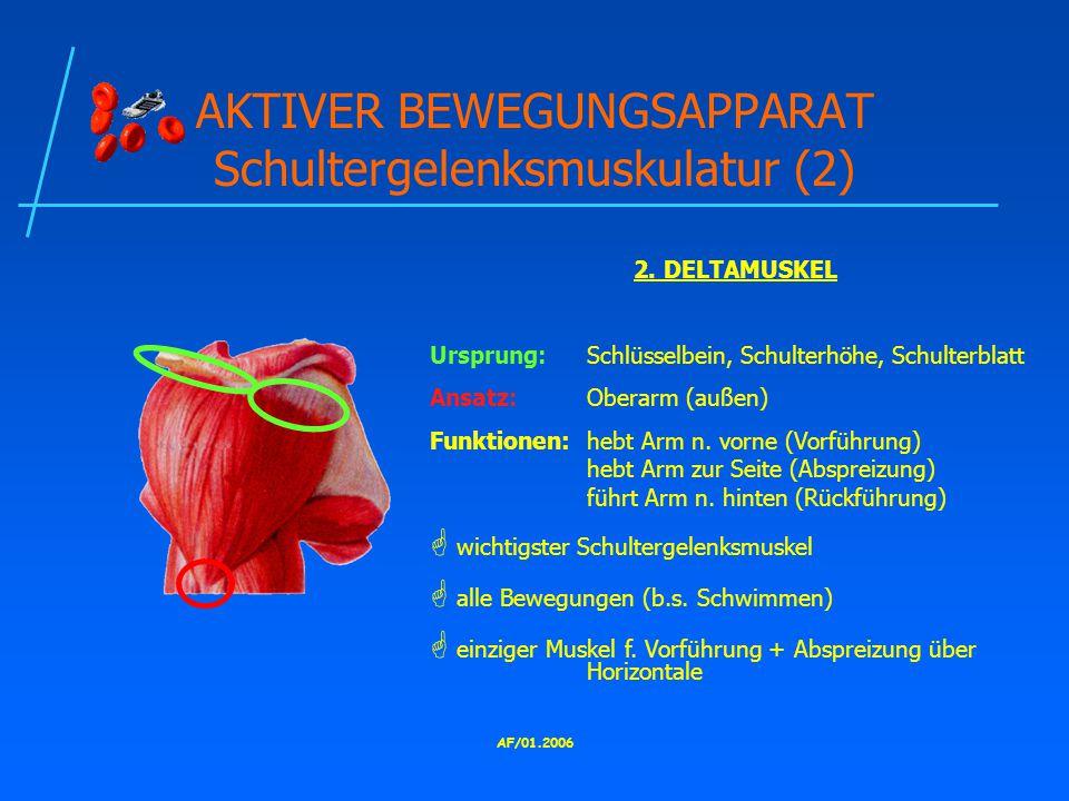 AKTIVER BEWEGUNGSAPPARAT Schultergelenksmuskulatur (2)
