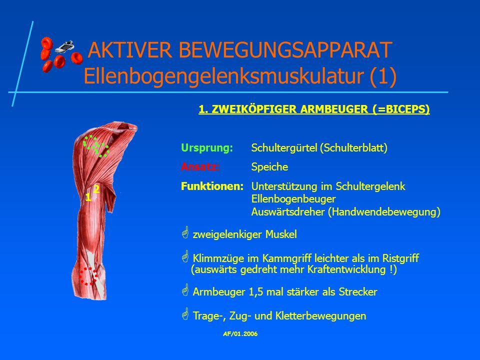 AKTIVER BEWEGUNGSAPPARAT Ellenbogengelenksmuskulatur (1)