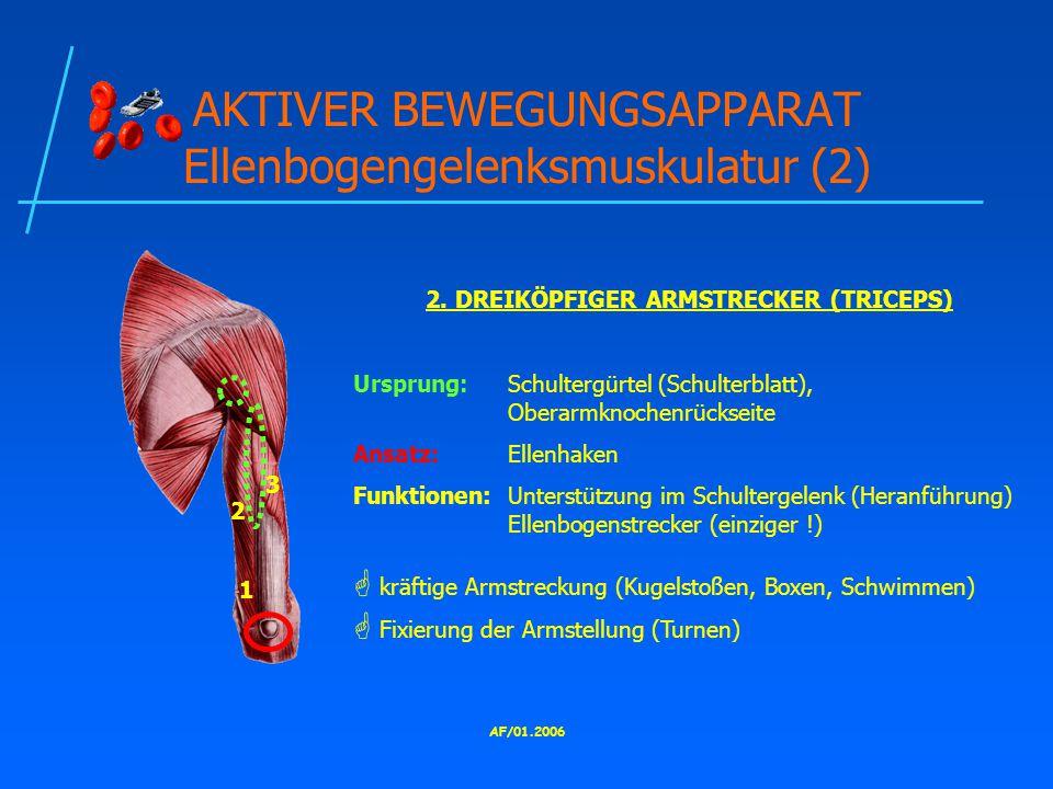 AKTIVER BEWEGUNGSAPPARAT Ellenbogengelenksmuskulatur (2)