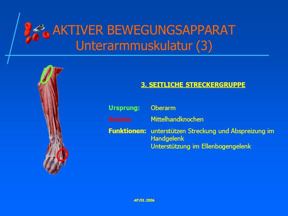 AKTIVER BEWEGUNGSAPPARAT Unterarmmuskulatur (3)