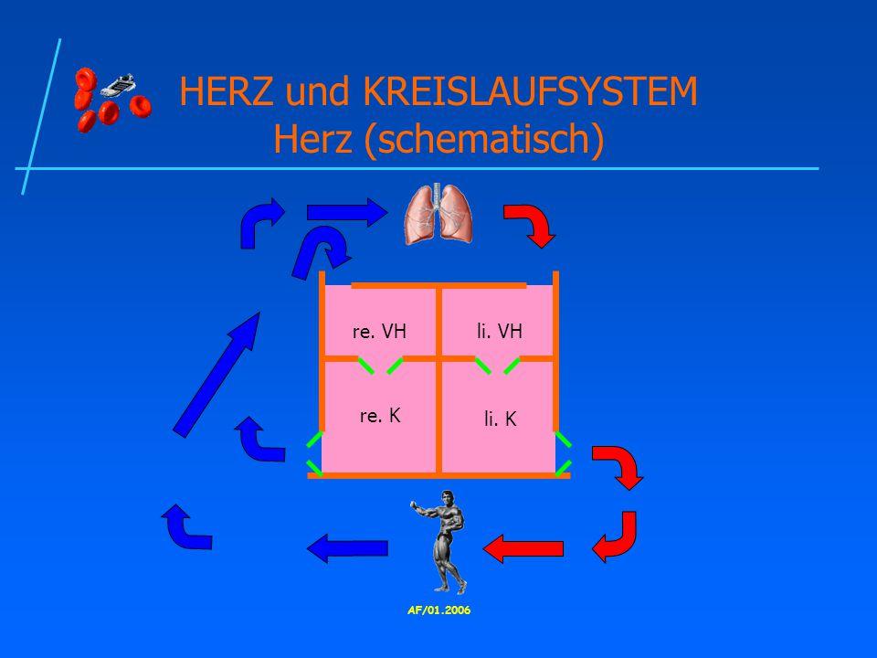 HERZ und KREISLAUFSYSTEM Herz (schematisch)
