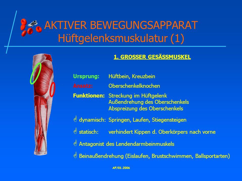 AKTIVER BEWEGUNGSAPPARAT Hüftgelenksmuskulatur (1)