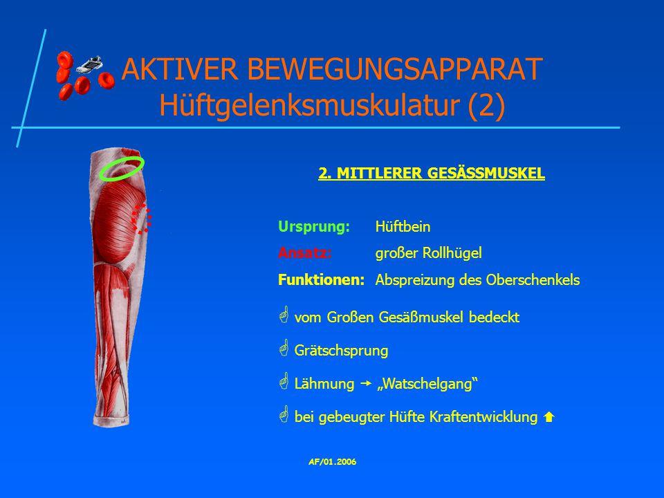 AKTIVER BEWEGUNGSAPPARAT Hüftgelenksmuskulatur (2)