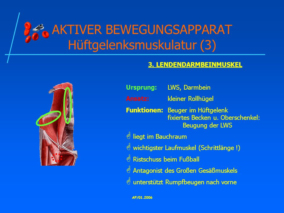 AKTIVER BEWEGUNGSAPPARAT Hüftgelenksmuskulatur (3)