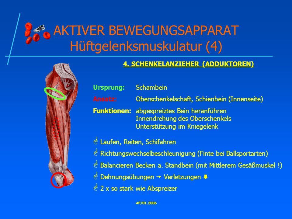 AKTIVER BEWEGUNGSAPPARAT Hüftgelenksmuskulatur (4)