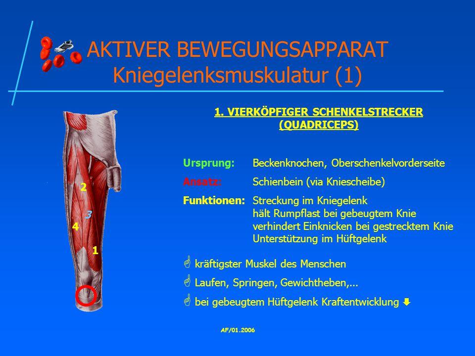 AKTIVER BEWEGUNGSAPPARAT Kniegelenksmuskulatur (1)