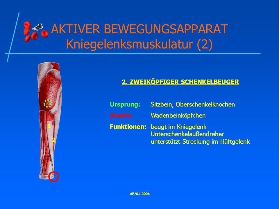 AKTIVER BEWEGUNGSAPPARAT Kniegelenksmuskulatur (2)