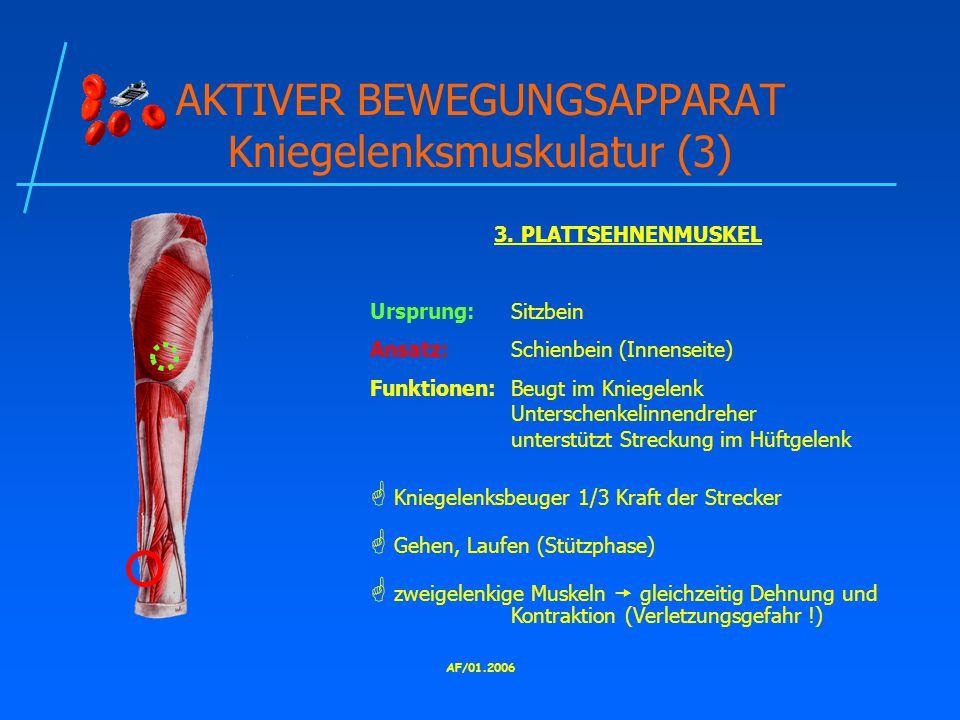AKTIVER BEWEGUNGSAPPARAT Kniegelenksmuskulatur (3)
