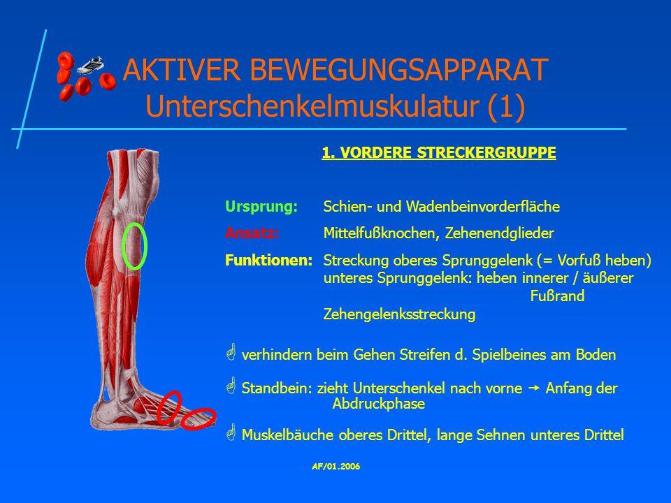 AKTIVER BEWEGUNGSAPPARAT Unterschenkelmuskulatur (1)