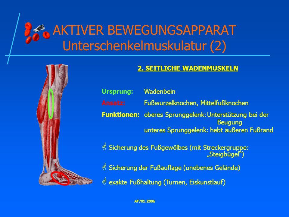AKTIVER BEWEGUNGSAPPARAT Unterschenkelmuskulatur (2)