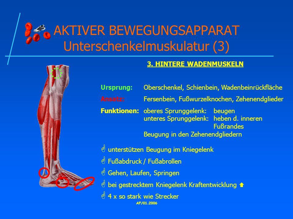AKTIVER BEWEGUNGSAPPARAT Unterschenkelmuskulatur (3)