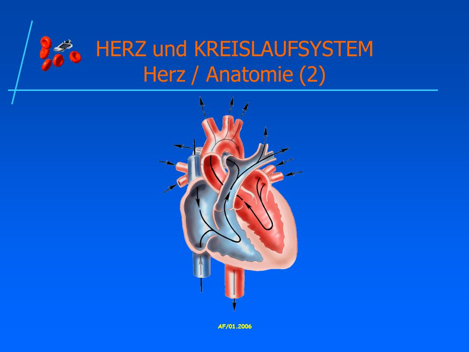HERZ und KREISLAUFSYSTEM Herz / Anatomie (2)