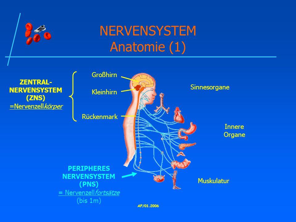 NERVENSYSTEM Anatomie (1)