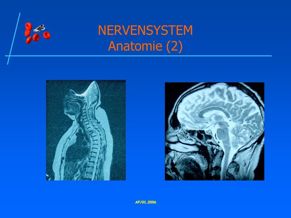NERVENSYSTEM Anatomie (2)