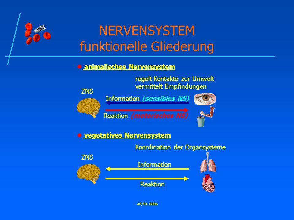 NERVENSYSTEM funktionelle Gliederung