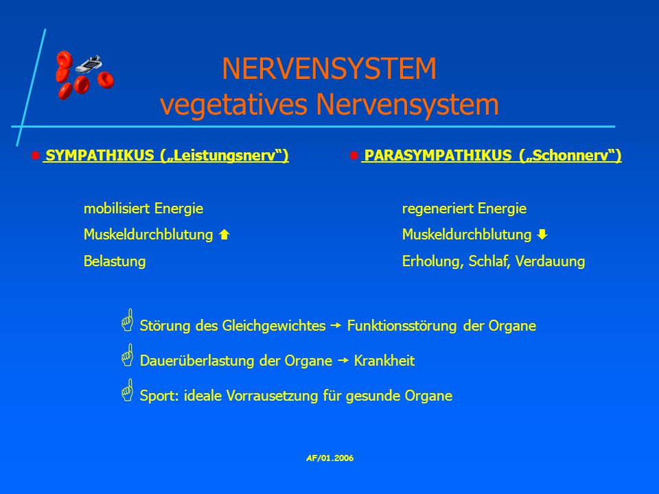 NERVENSYSTEM vegetatives Nervensystem